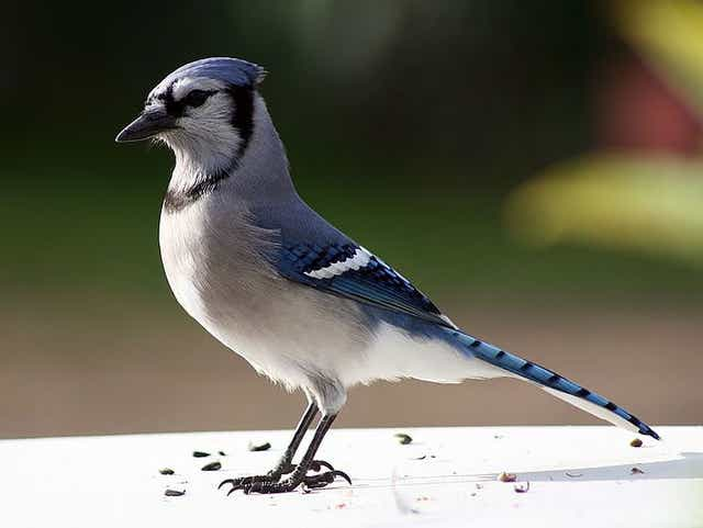 What Stumped the Blue-jays