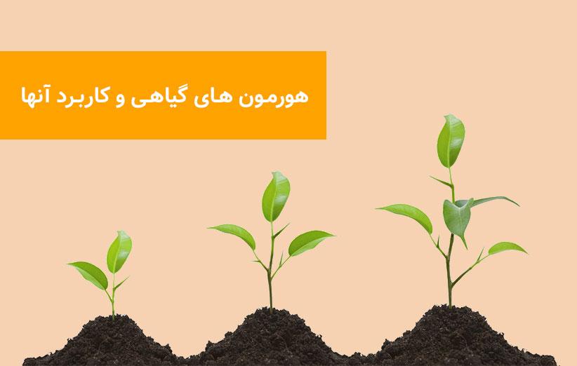 اثر هورمون های گیاهی در کشت گلخانه ای